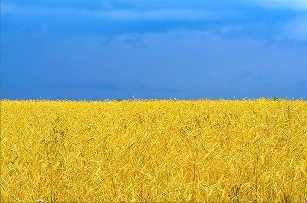 Прапор України - Прапор України - Галерея - Головна
